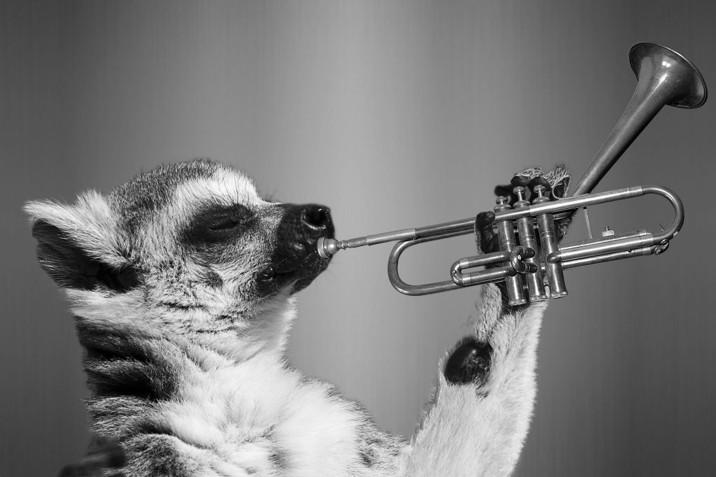 Blow the Horn!
